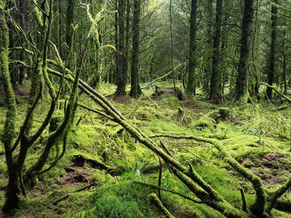 The dark woods of Halvana Plantation