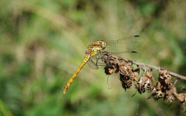 Nature Reserve Spotlight: Crackley Wood