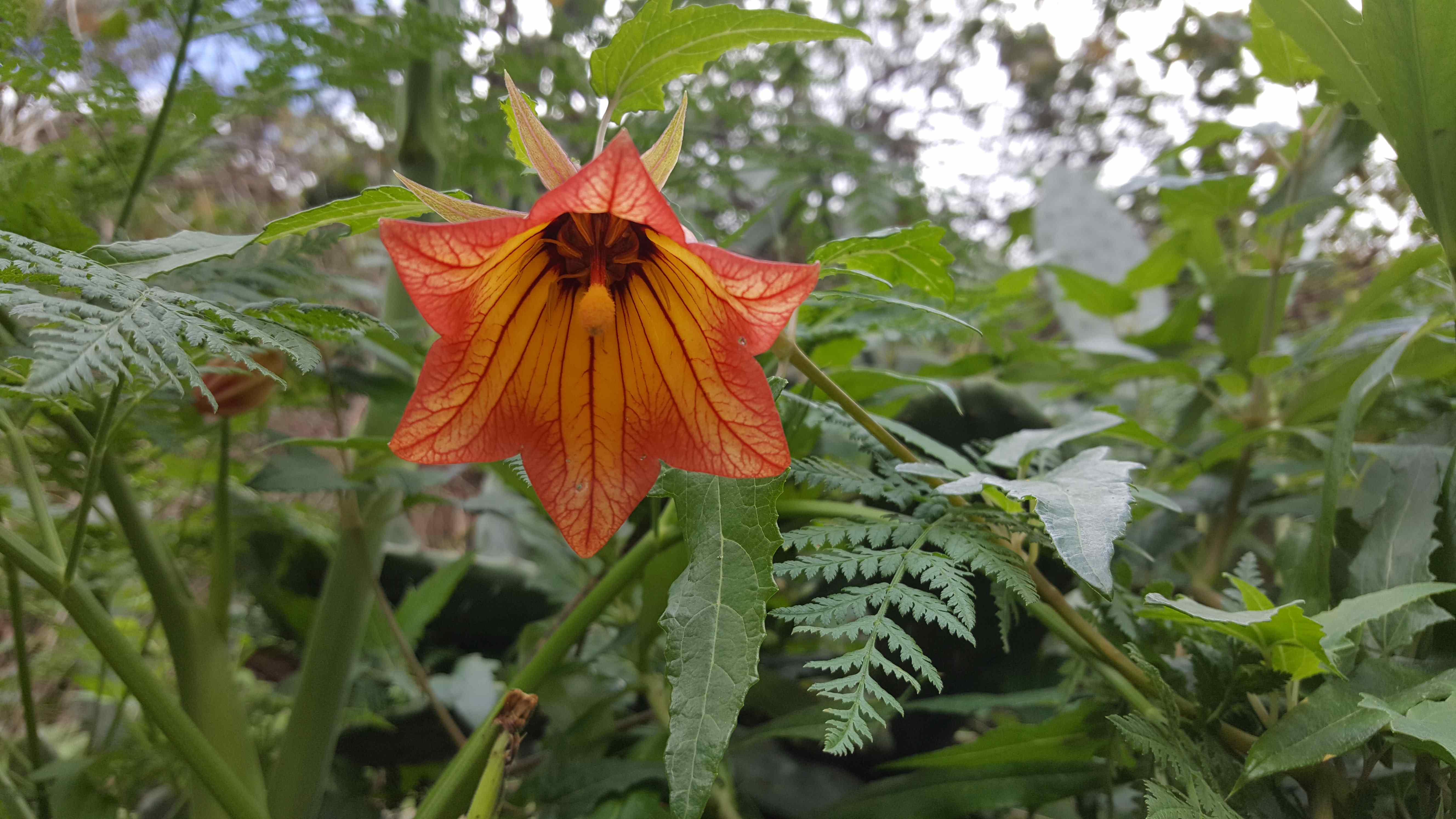 Red and orange flower surrounded by other leafs