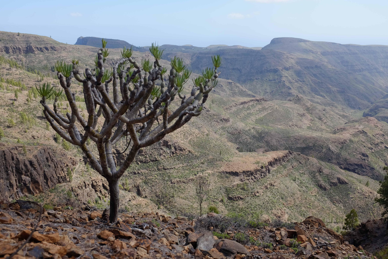 Gran Canaria: Hiking in Mogán