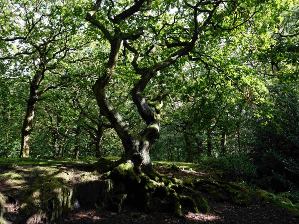 Nature Reserve Spotlight: Swithland Wood