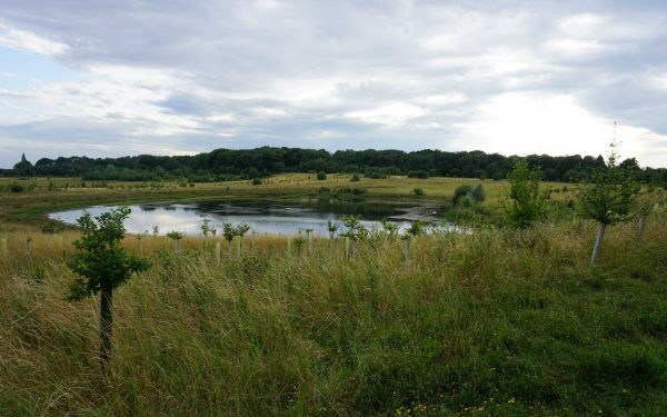 Nature Reserve Spotlight: Bubbenhall Wood