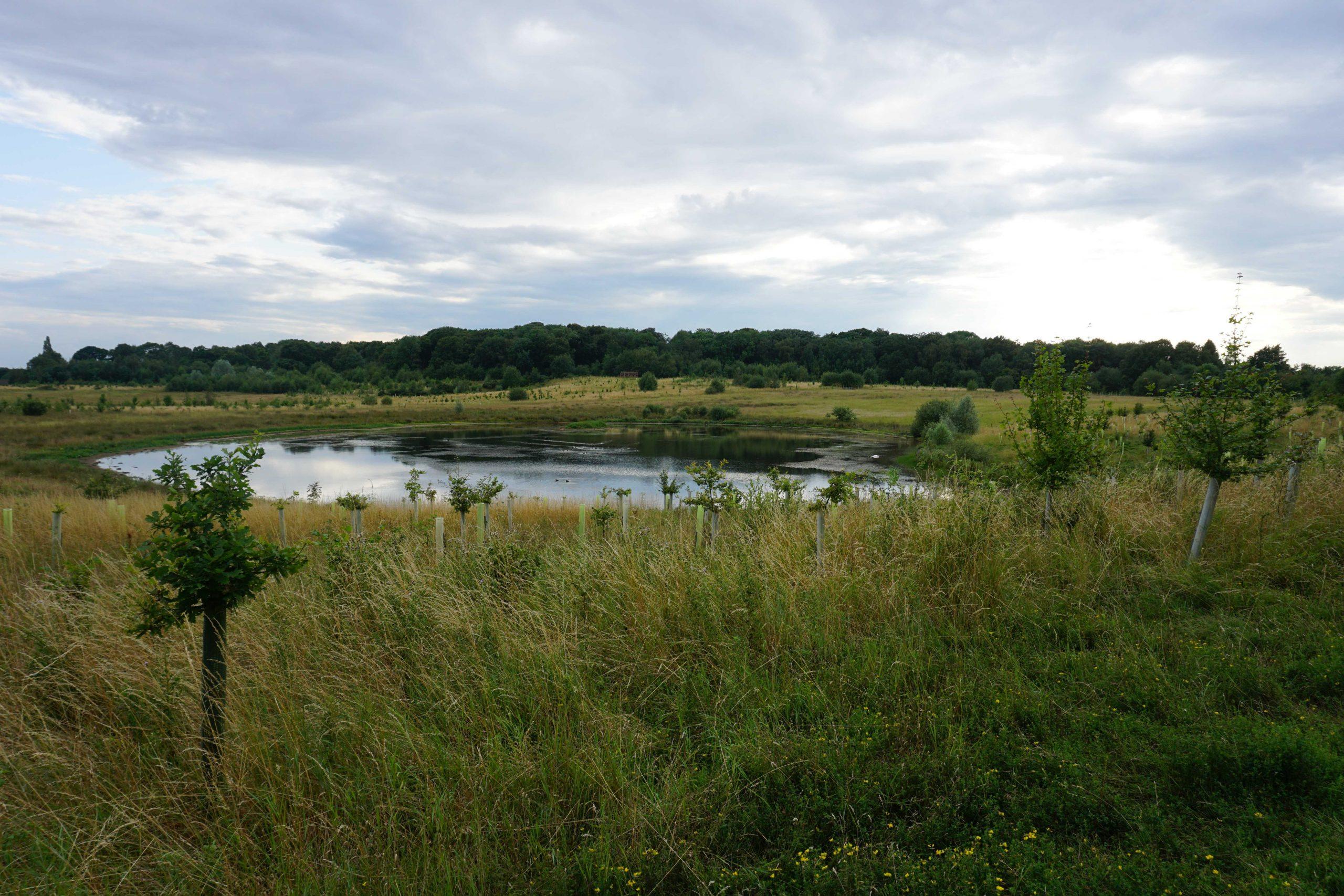 Nature Reserve Spotlight:BubbenhallWood