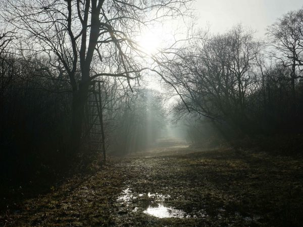 Nature Reserve Spotlight: Ryton Wood
