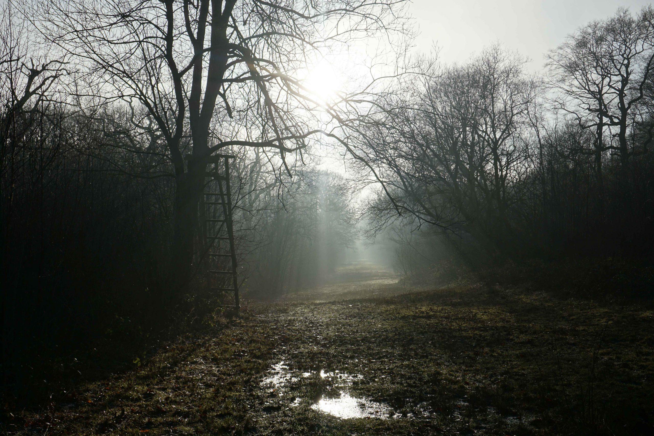 Nature Reserve Spotlight: Ryton Wood