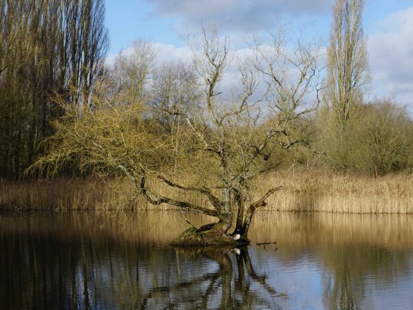 Nature Reserve Spotlight: Brandon Marsh